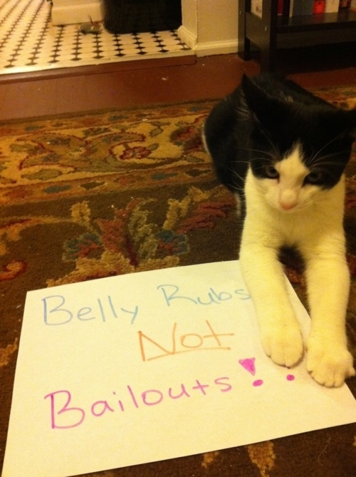 """""""I will fight furr my rights since I am part of the 99 purrcent!"""" Link"""