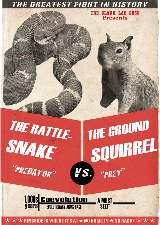 Squirrel-Snake Faceoff!