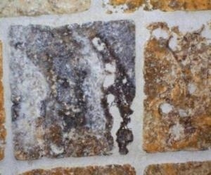 Face of Jesus Found in Shower Wall Tile