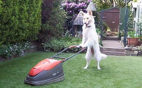 "The first patent for a mechanical lawn mower described as a ""Machine for mowing lawns, etc."" was ..."