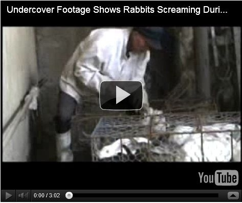 Undercover Footage Shows Rabbits Screaming During Slaughter