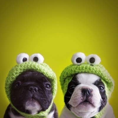 Pug-Frogs