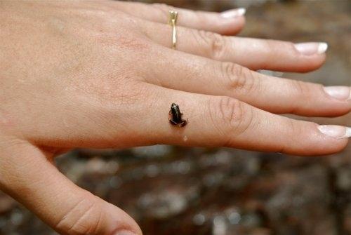58 Very Tiny Cute Things