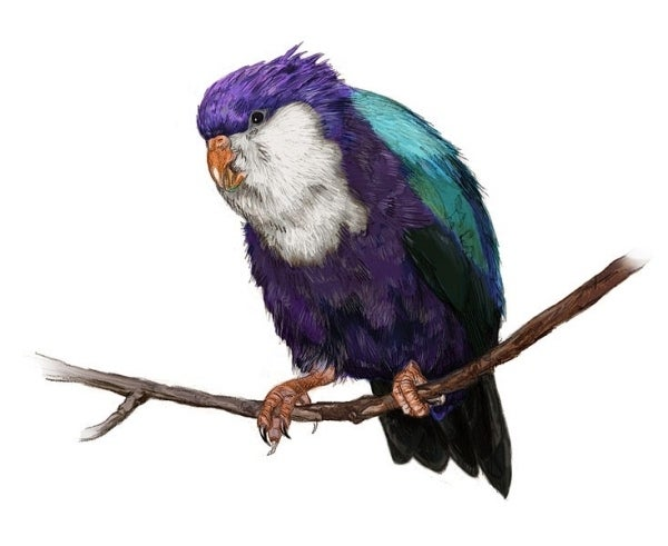 "Better known as the Conquered Lorikeet, Vini vidivici was a South Pacific parrot that went extinct roughly 700-1300 years ago. The name derives from the phrase ""veni, vidi, vici,"" which means ""I came, I saw, I conquered."""