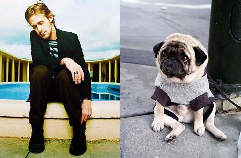Is Ryan Gosling Cuter Than A Puppy?