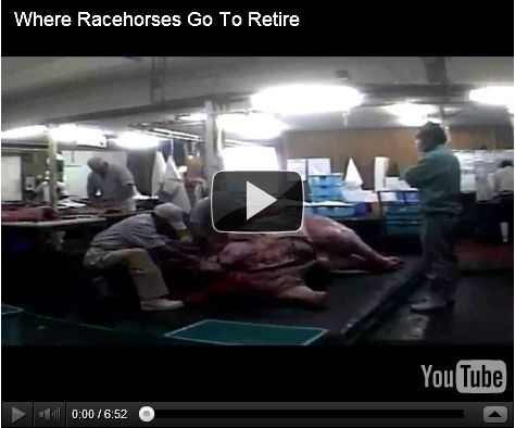 Where Racehorses Go To Retire