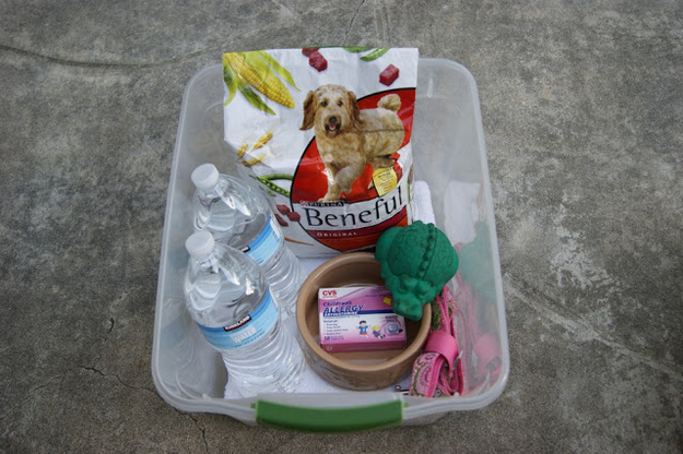 Pack an emergency preparedness kit for your pet.