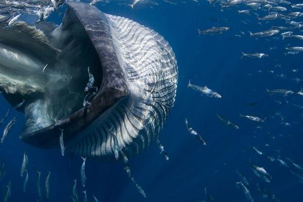 Underwater World Finalist