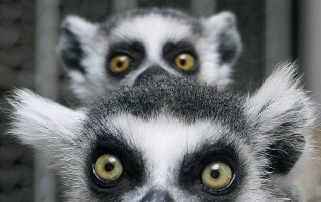 Peek-a-boo.