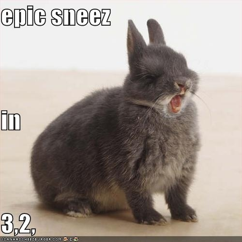 Funny video compilation of animals sneezing - Awesomelycute