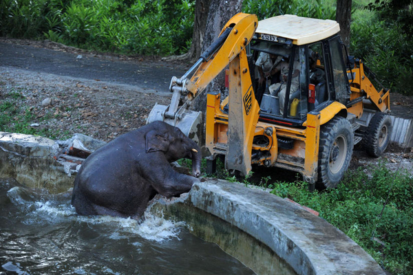 Baby elephant takes the hint, and...