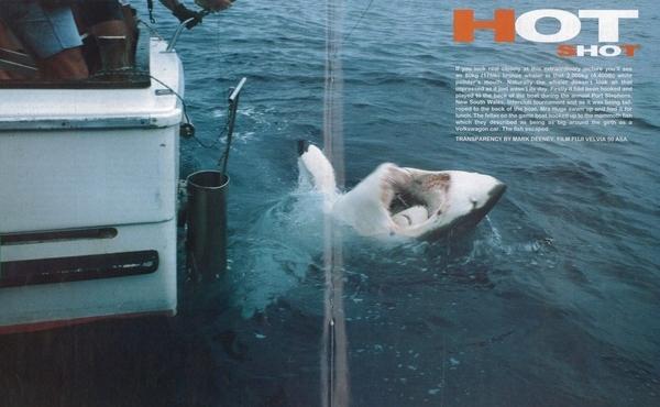 Yo Discovery, We Heard You Like Sharks.