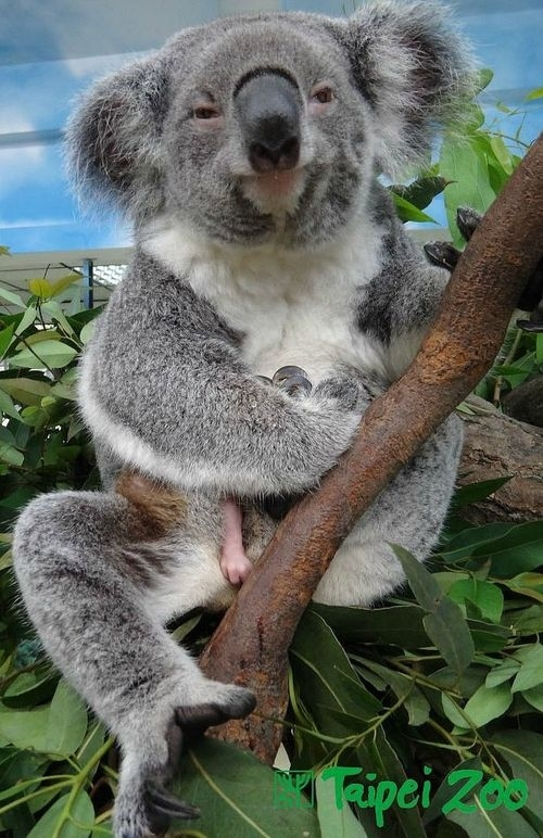Why Are Koalas So F*ck...