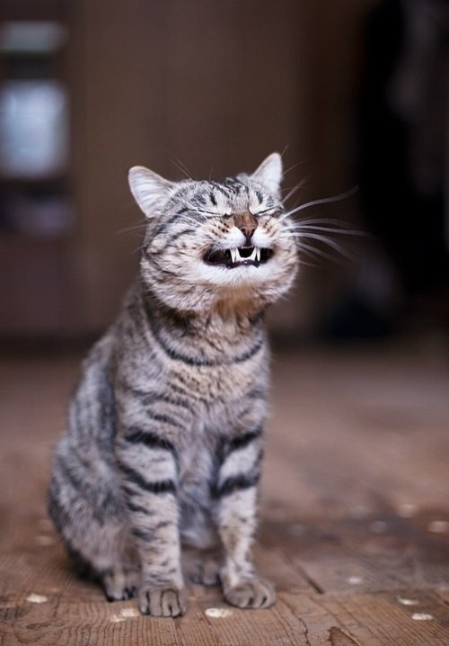 16  Of The Smiliest Cats On The Internet | Bored Panda