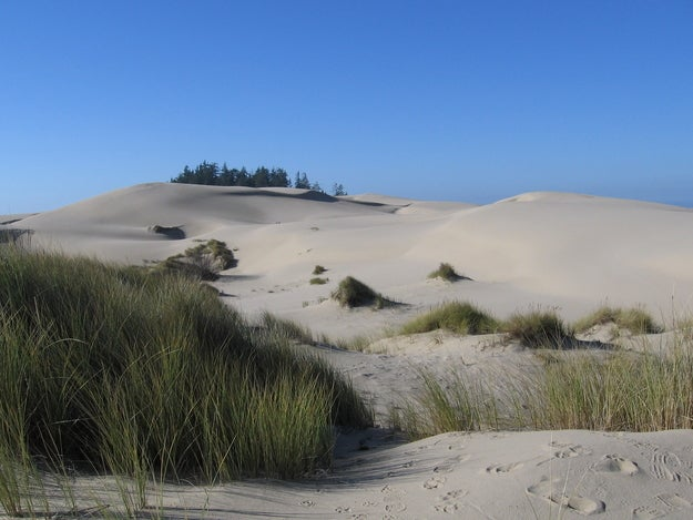In the late 1950s, Frank Herbert traveled to Florence, Oregon to write an article about the U.S. Agriculture Department's attempts to control the spread of sand dunes with poverty grass. Herbert ended up putting the article on hold and instead turned his ecological research into the well-known Dune Saga.