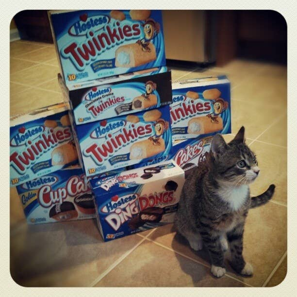 We're gonna be OK, Professor. We'll make it through...for a while. #Hostess #Apocalypse