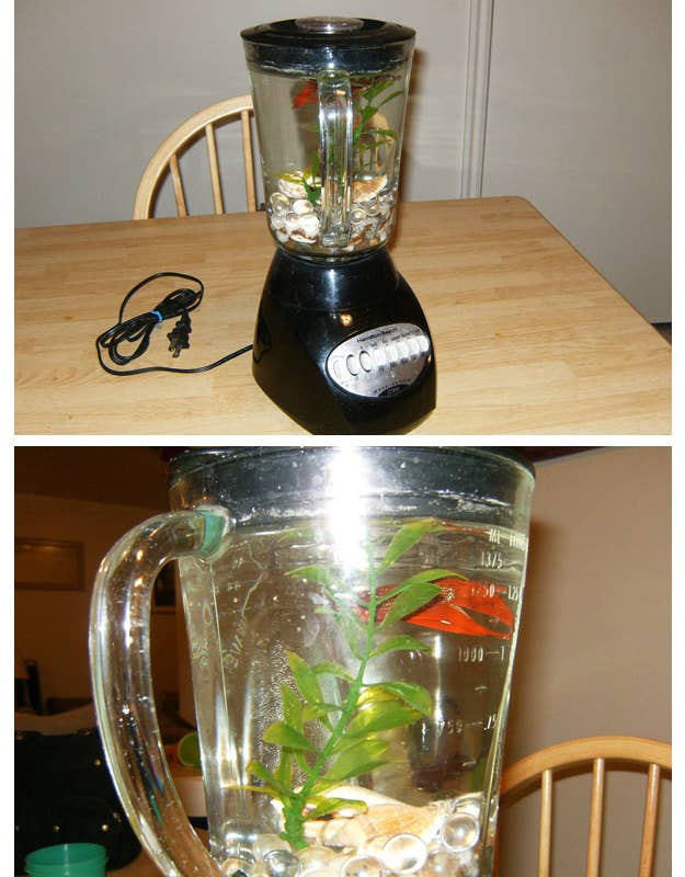 Non-Functioning Blender Betta Fish Tank