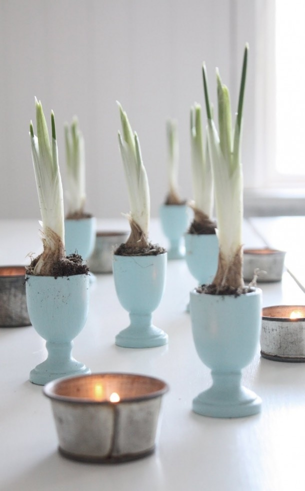 Use painted egg cups to display bulbs.