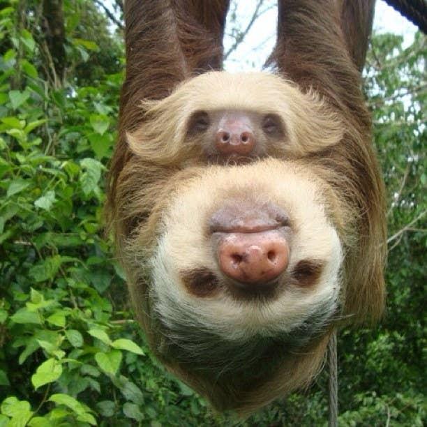 "Important because ""Sloths Sloths Sloths Sloths Sloths Sloths Sloths Sloths Sloths Sloths Sloths Sloths Sloths Sloths Sloths Sloths Sloths Sloths Sloths Sloths"""