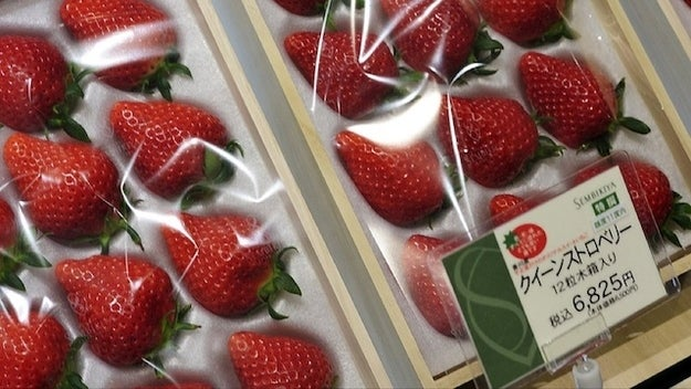 Image result for fruit japan expensive