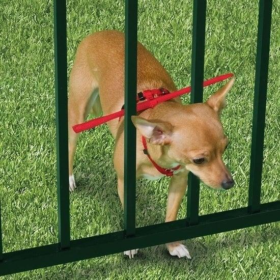 Parece meio bobo, mas é mais seguro do que correr o risco de ter um cão fugitivo. Compre aqui.