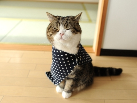 Squishy Cats Buzzfeed : 15 Reasons Maru Is Better Than Your Cat