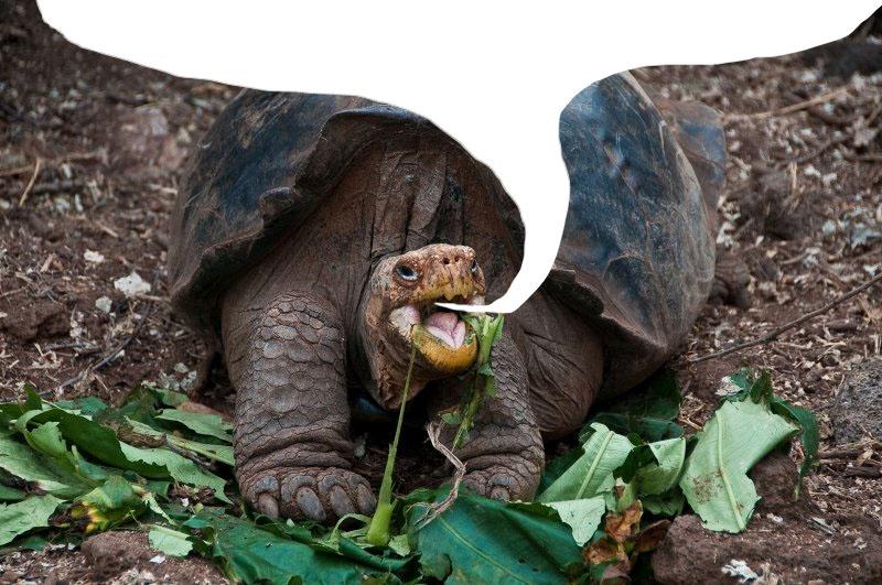 19 Tortoises Explaining Monsanto's Unpopularity