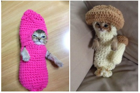 Wasabichan is known for dressing up in a knitted mushroom and a tarako (salted cod roe). Because of her injury inside the mouth, she cannot swallow food. In order to get fed with a catheter, she needs to not struggle, and that's why @jessiepon is making her wear these costumes to restrain her movement.