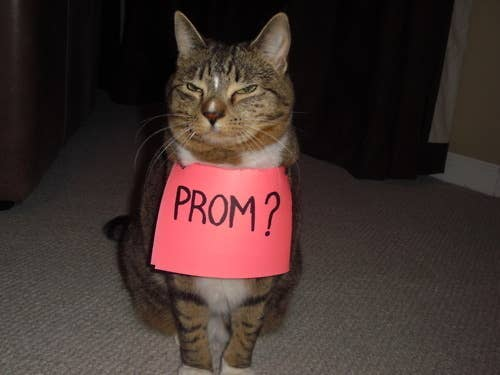 Creative Ways To Ask Someone To Prom - Guy gives up finding prom date and decides to take his cat instead