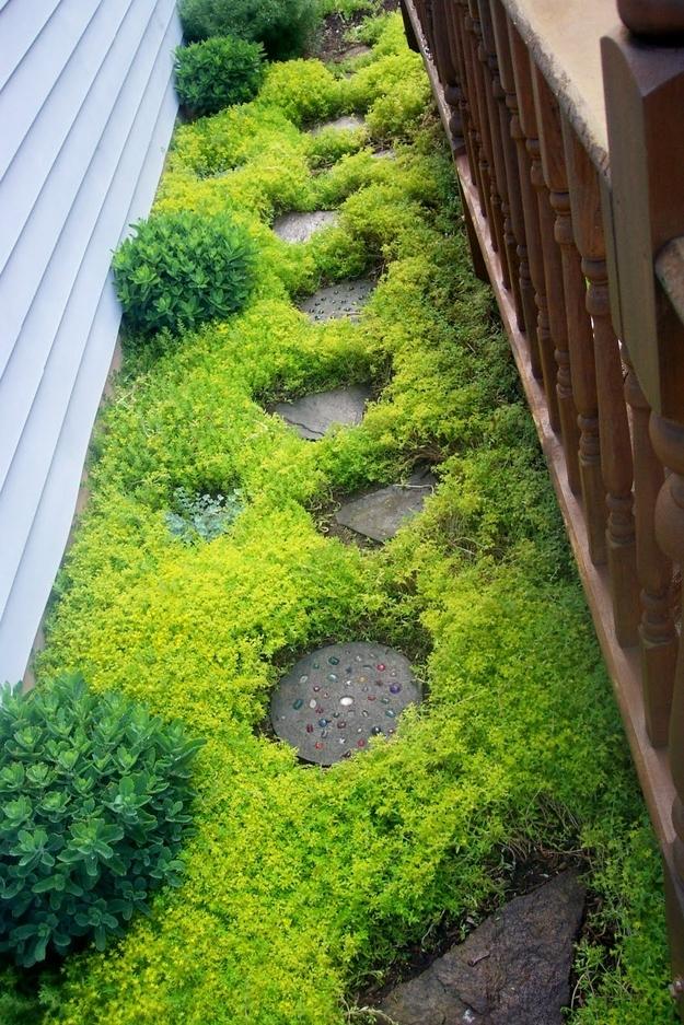 The Sedum Sarmentosum Plant Makes A Fast Growing Ground Cover.
