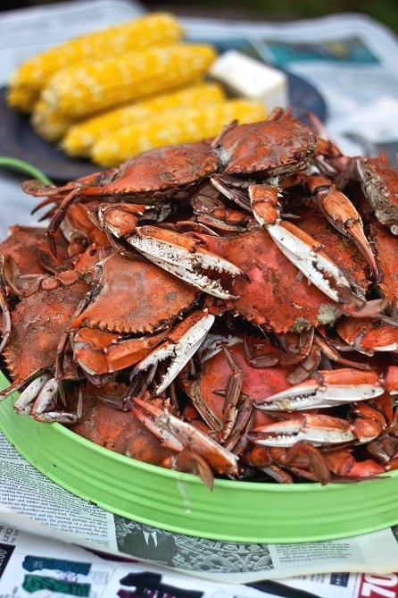 Eat Maryland blue crabs.