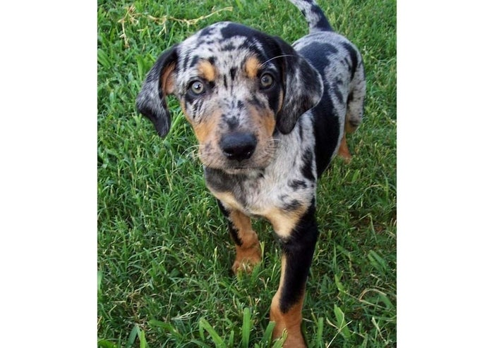 Only 26% of households own cats while 48% own dogs. Louisiana's loves dogs so much that it has a state dog, the Catahoula, which is believed to be the first dog breed developed in North America.