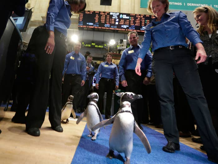 Penguins ruled the NYSE during SeaWorld's IPO on April 19, 2013.