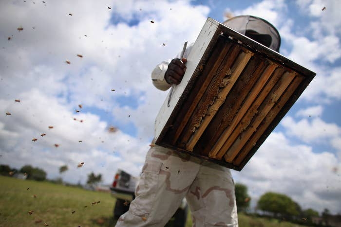 Note: Pictured above is J & P Apiary and Gentzel's Bees, Honey and Pollination Company
