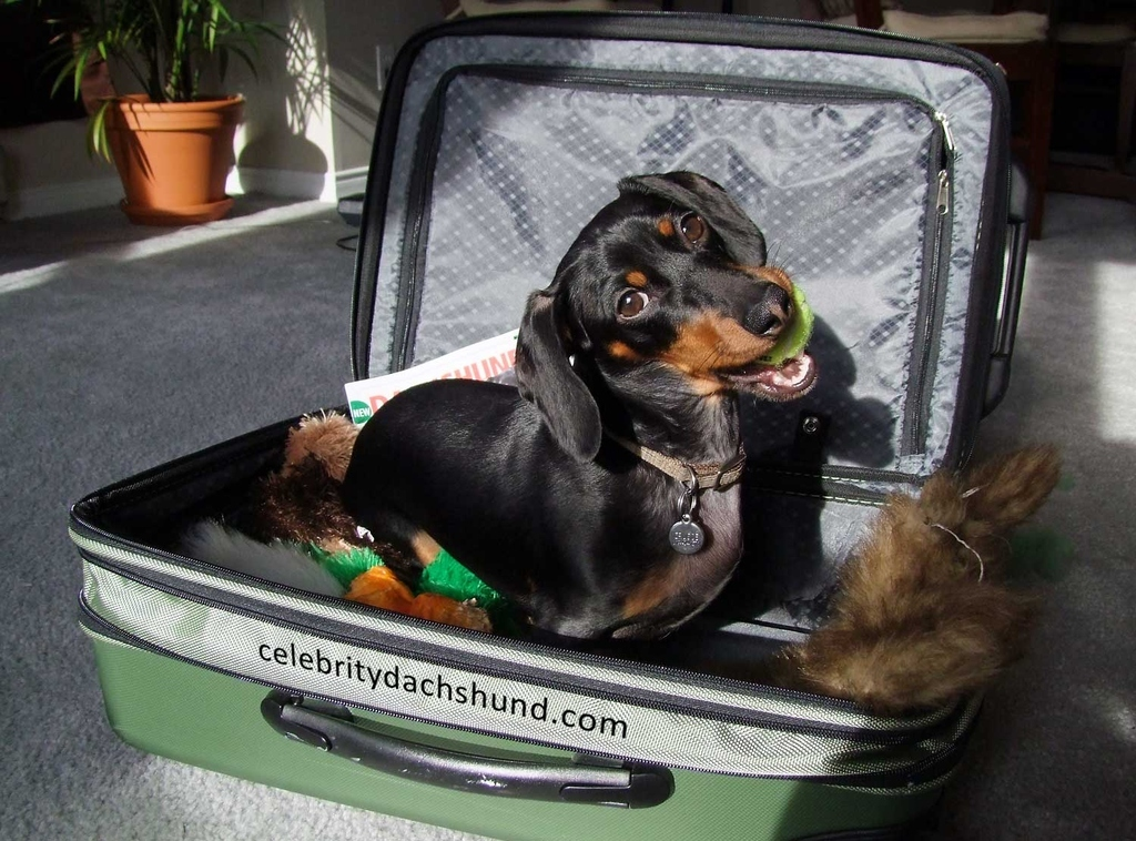 24 Things Your Dachshund Can Do For You