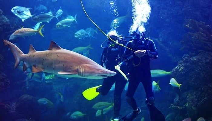 """Tired of seeing sharks from behind the glass? If you have a scuba license, this friendly shark hotspot takes certified visitors on a shark dive at the Florida Aquarium. Per the aquarium, you can """"expect warm, clear water, teeming with massive sharks, moray eels, barracuda, a green sea turtle and more!"""""""
