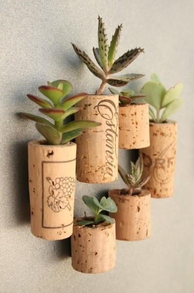 Succulent Cork Planters
