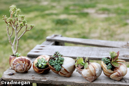 Shell-Potted Plants