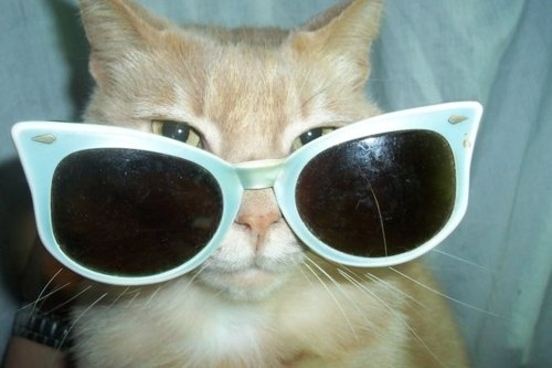 Kittens wearing glasses