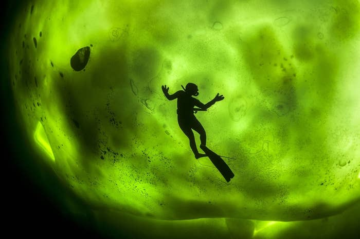 A diver swims under ice illuminated by the Northern Lights.