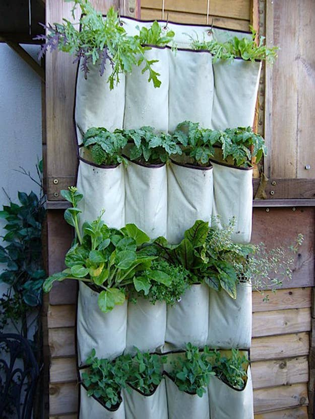 Build upwards, not outwards, and repurpose a shoe organiser as a planter. DIY here