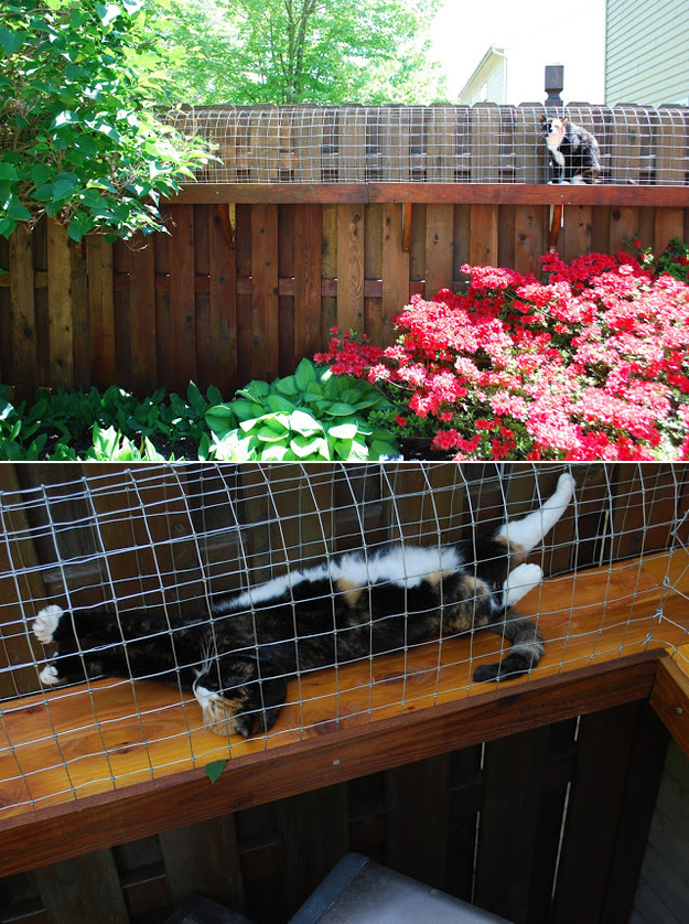 Create an outdoor tunnel system for your indoor cat.