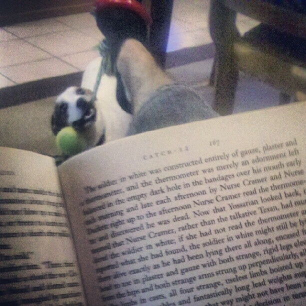 Got a lot of studying to do? Here's how to read and play with your dog at the same time: