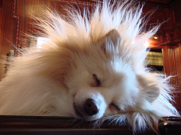 Run a dryer sheet over your dog's fur when there's a storm — chances are, they aren't freaked out about the storm but the static electricity built up in their fur.