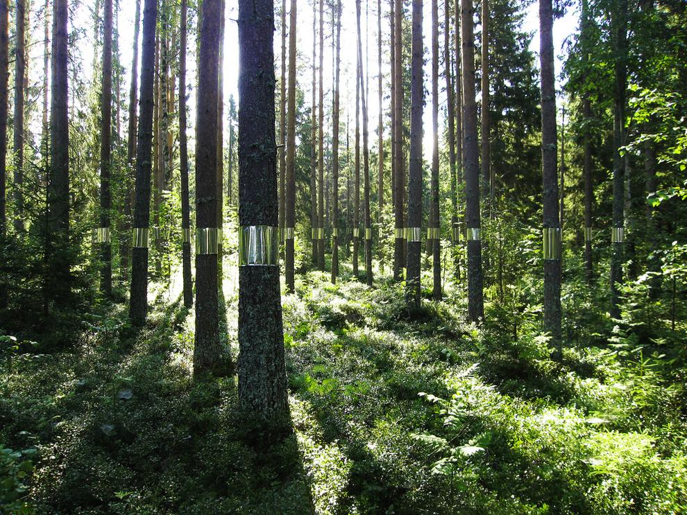 """""""Clear Cut"""", de la firma Kjellgren Kaminsky Architecture"""