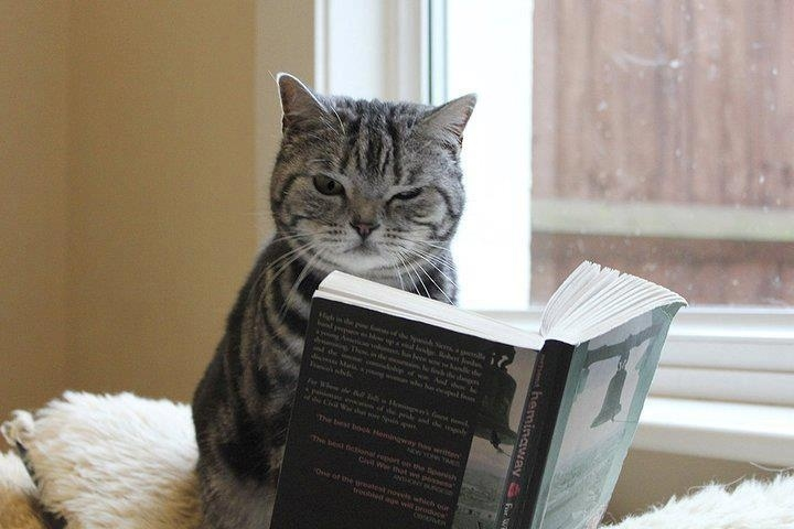 12 Cats Who Are Serious About Reading
