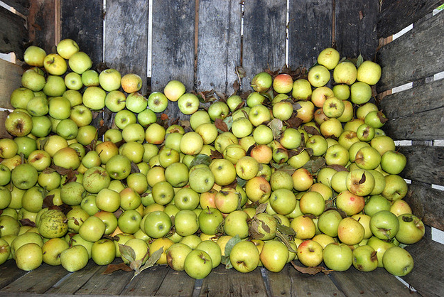 The apple you're eating might be a year old.