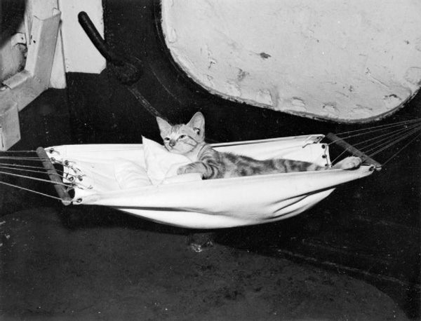 These Adorable 1940s Naval Cats Had Their Own Hammocks
