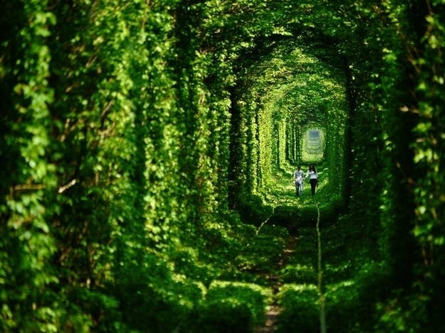 """The """"tunnel"""" is actually a railway that transports wood to a local factory."""
