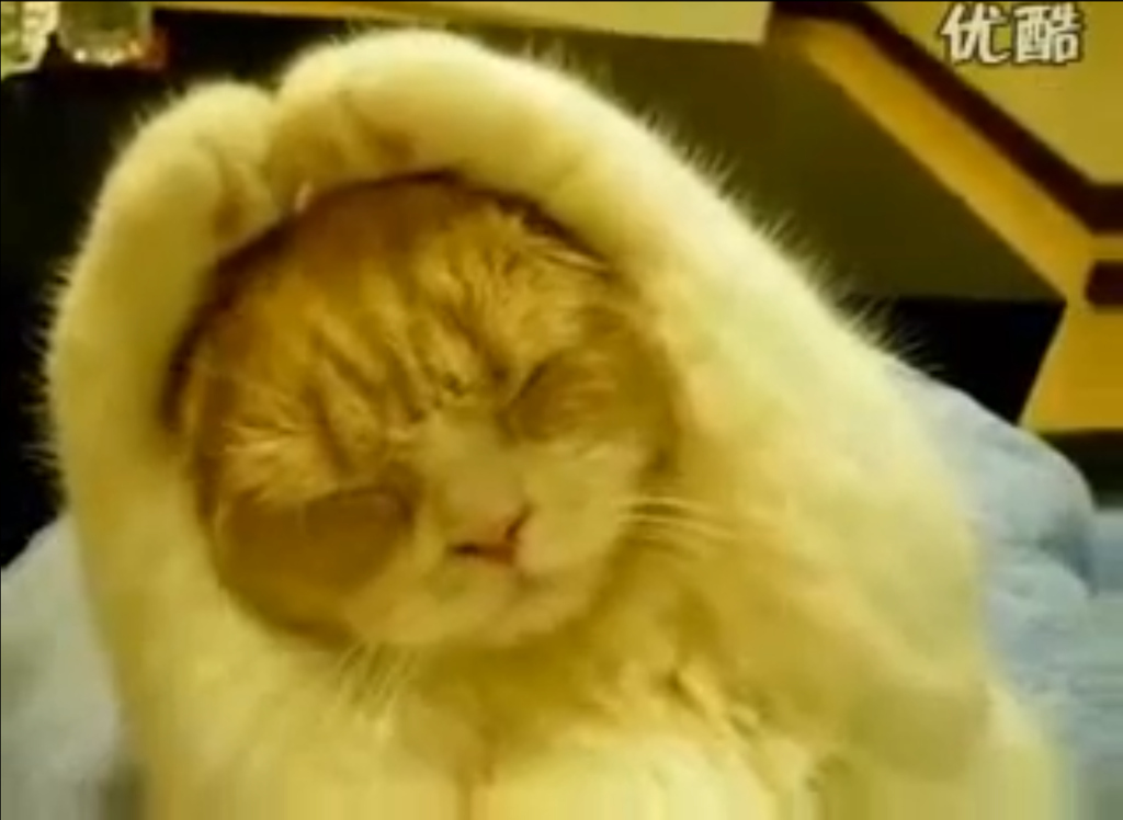 13 Worst Types Of Cats To Take To A Concert